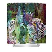 Japanese Iris Tall 2694 Idp_4 Shower Curtain