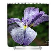 Japanese Iris Unfolding Shower Curtain
