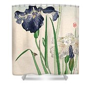Japanese Irises Shower Curtain