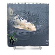 Japanese Koi Fish Shower Curtain