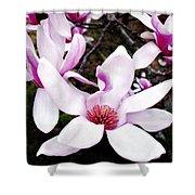 Japanese Magnolia Shower Curtain