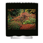Japanese Maple At The Japanese Gardens Portland Shower Curtain