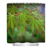 Japanese Maple Foliage Shower Curtain