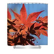 Japanese Maple In Sunlight Shower Curtain