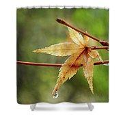 Japanese Maple In The Rain Shower Curtain