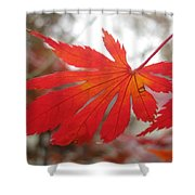 Japanese Maple Leaf 1 Shower Curtain