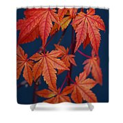 Japanese Maple Leaves In Autumn Shower Curtain