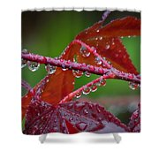 Japanese Maple On A Rainy Day Shower Curtain