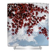 Japanese Maple Red Lace - Horizontal View Downwards Right Shower Curtain