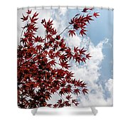 Japanese Maple Red Lace - Vertical Up Right Shower Curtain
