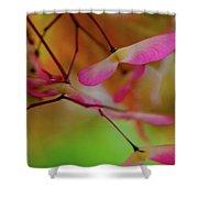 Japanese Maple Seedlings Shower Curtain