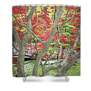 Japanese Maple Tree And Pond Shower Curtain