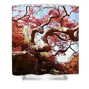 Japanese Maple Tree In Spring Shower Curtain