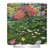 Japanese Maple Tree On A Mossy Slope Shower Curtain