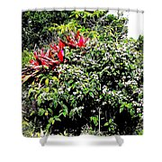 Jardinagem Shower Curtain by Eikoni Images