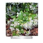 Jasmine In Bloom Shower Curtain