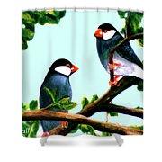 Java Sparrows  #102 Shower Curtain