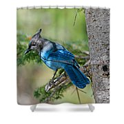 Jay Bird Shower Curtain