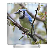 Jay In June Shower Curtain