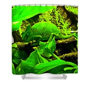 Jeanette Shower Curtain