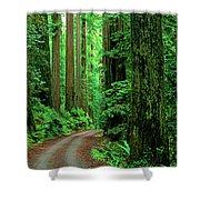 Jedediah Smith Redwoods                            Shower Curtain