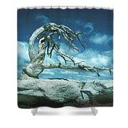 Jeffrey Pine Sentinel Dome Shower Curtain