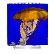Jellyfish In Blue Waters Shower Curtain
