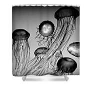 Jellyfish In Monochrome Shower Curtain