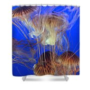 Jellyfish Shower Curtain