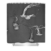 Jellyfish World - Bw Shower Curtain