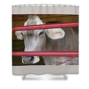Jersey Calf Shower Curtain