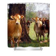 Jersey Lookers Shower Curtain