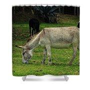 Jerusalem Donkey Grazing In A Field Shower Curtain