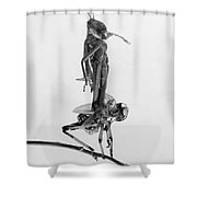 Jerusalem: Locusts, 1915 Shower Curtain by Granger