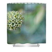 Jerusalem Sage Seed Head Shower Curtain