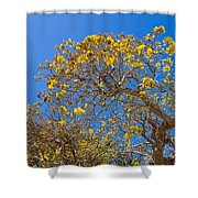 Jerusalem Thorn Tree Shower Curtain