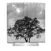 Jetty Tree Shower Curtain