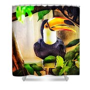Jewel Of The Amazon Toco Toucan  Shower Curtain