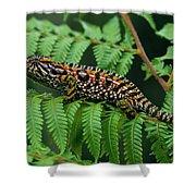 Jeweled Chameleon Furcifer Lateralis Shower Curtain