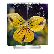 Jewelled Pansy Shower Curtain