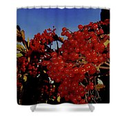 Jewels Of Autumn 4 Shower Curtain