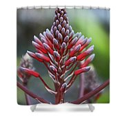 Jilted In June- Vertical Shower Curtain