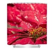 Jingle Bells 3 Poinsettia Shower Curtain