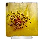 Jitterbug Shower Curtain