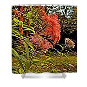 Joe-pye-weed Near Schroon River In New York Shower Curtain