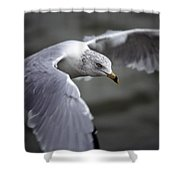 Johnathan Livingston Seagull Shower Curtain