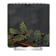 Joint Vetch With Dragon Fly Shower Curtain