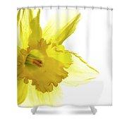 Jonquil Light Shower Curtain