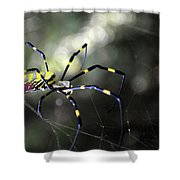 Jorogumo Queen  Shower Curtain