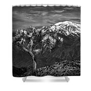 Joshua Tree At Keys View In Black And White Shower Curtain